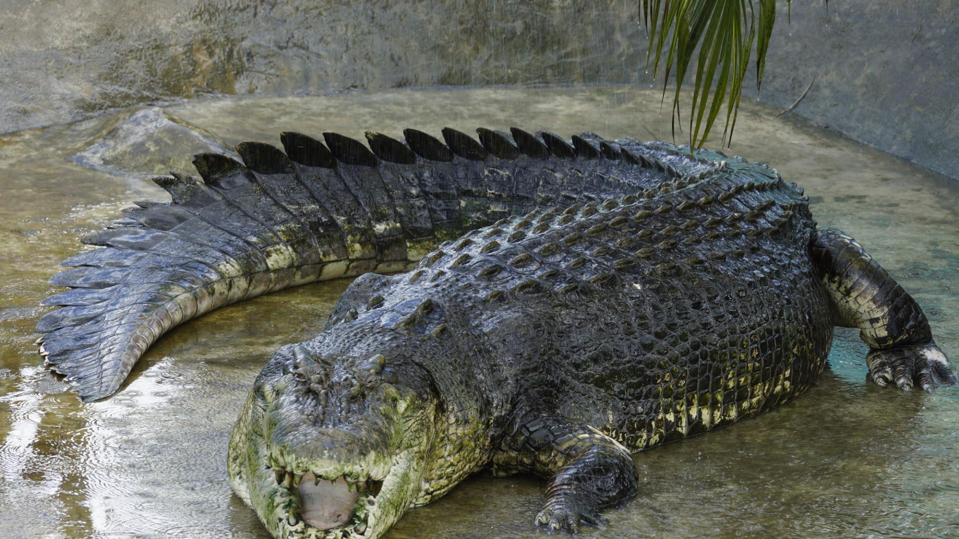 Lov na najvećeg krokodila