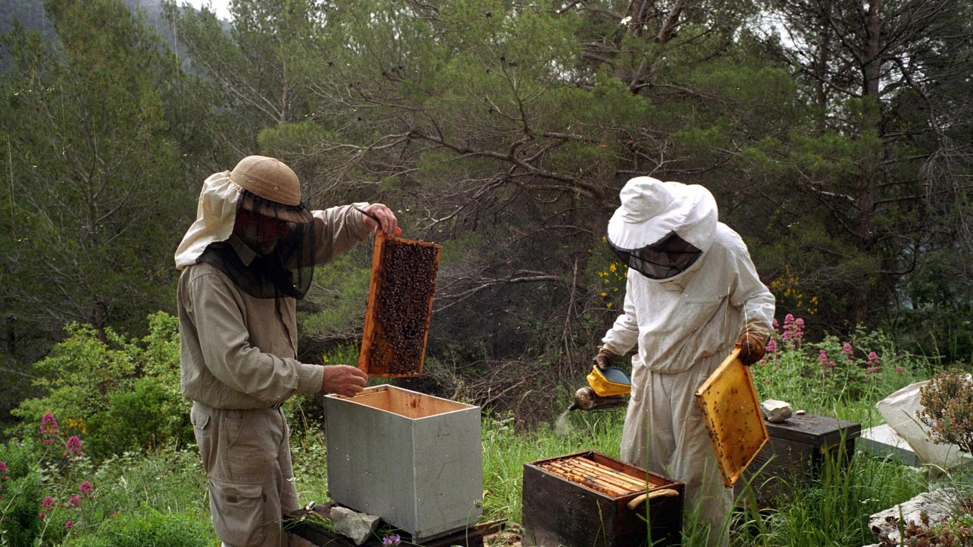 Nestajanje pčela: Zagonetka riješena