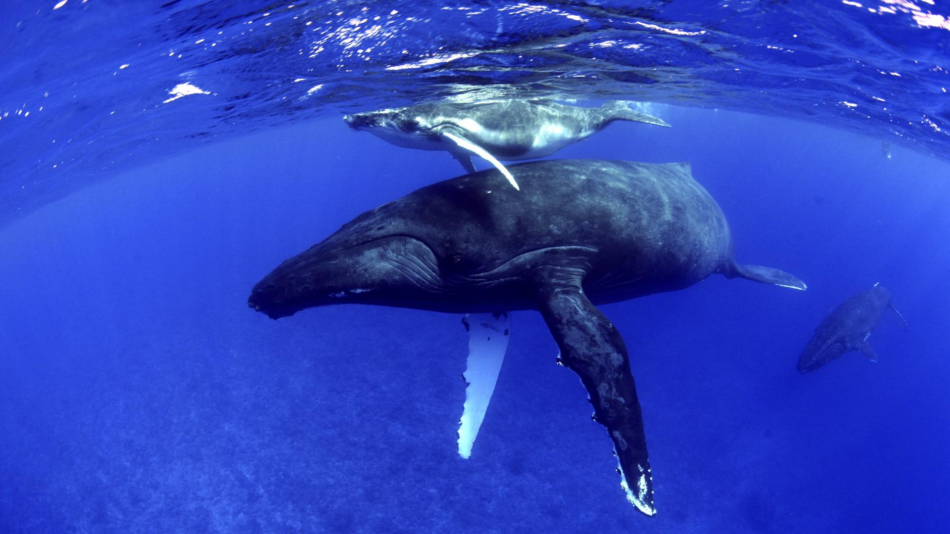Jahači kitova