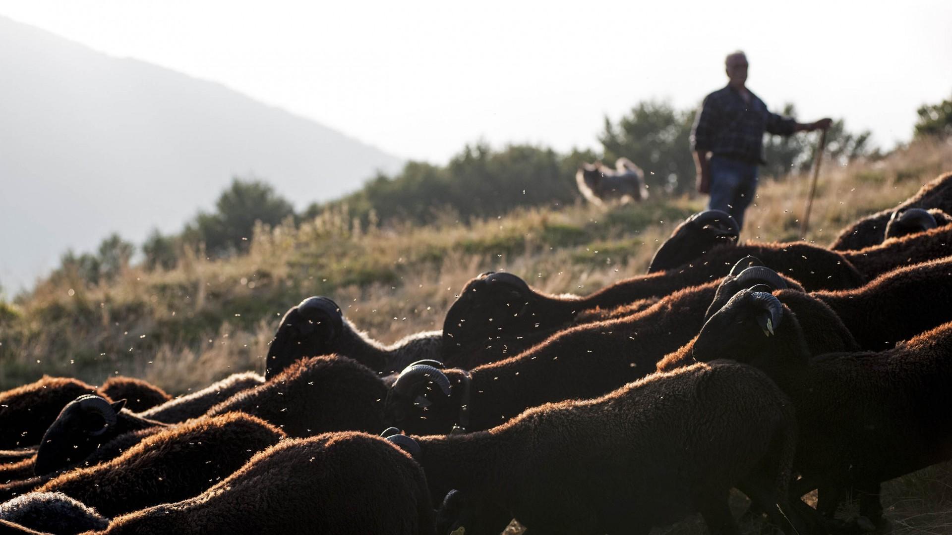 Emocije Italije: Pastir i planina