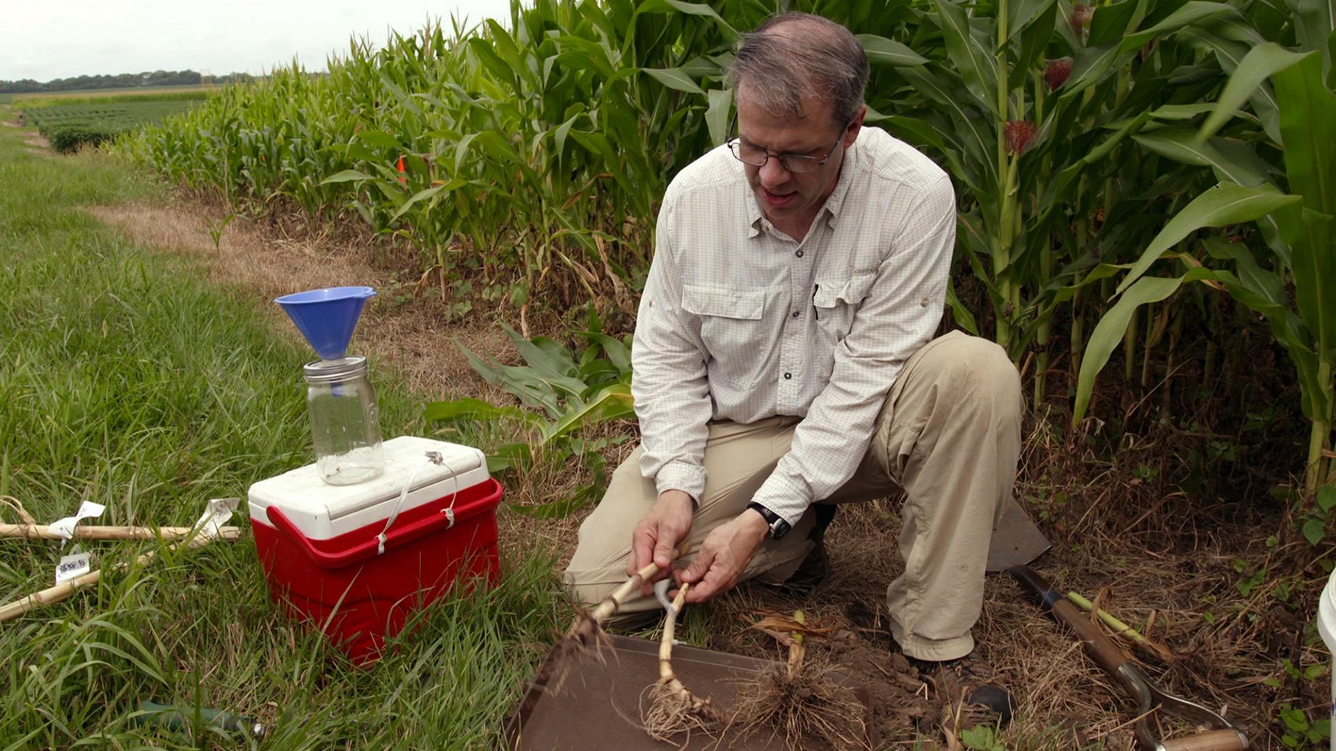 GMO: Laži i istine