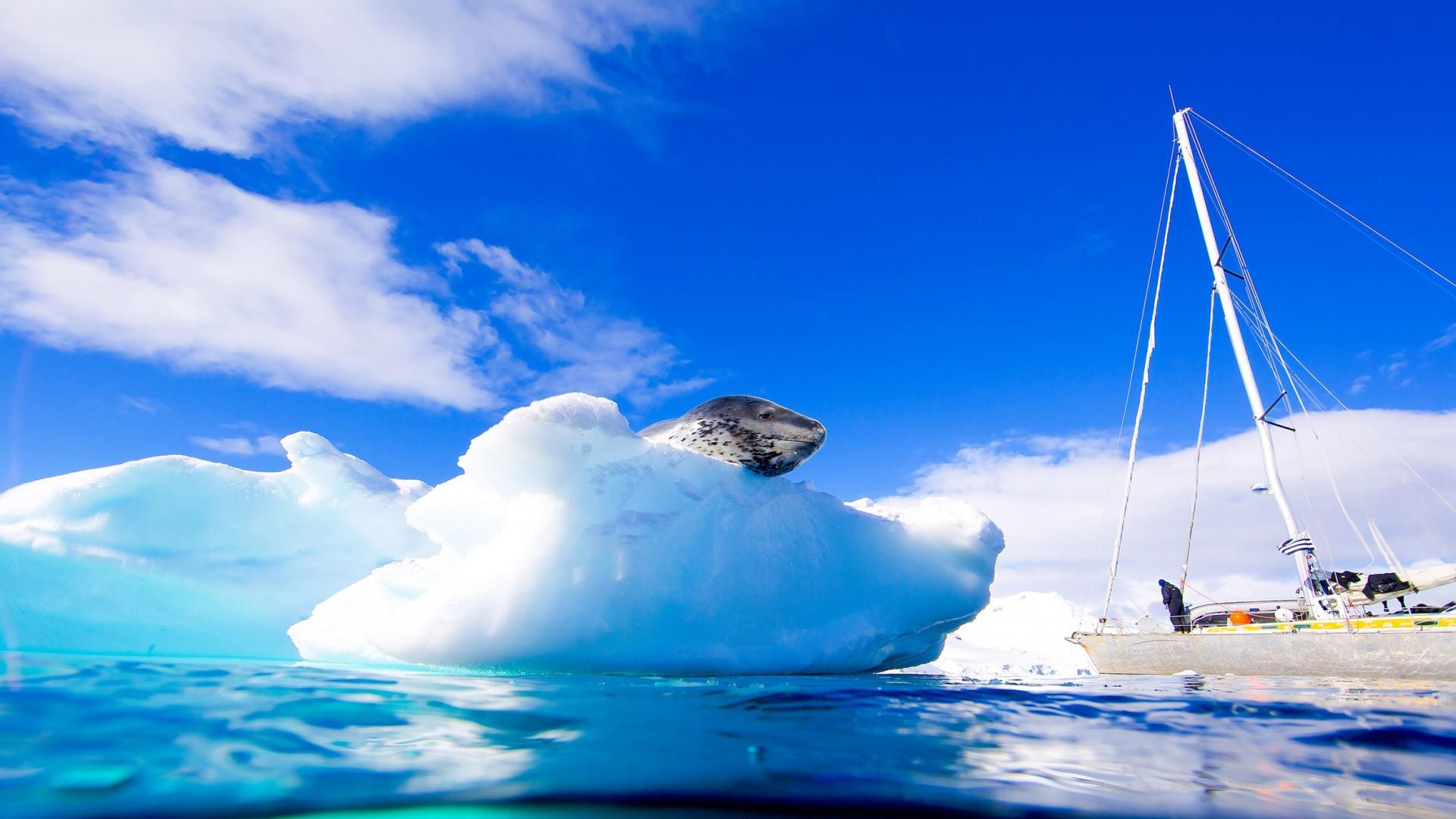 U plavetnilu Antarktike