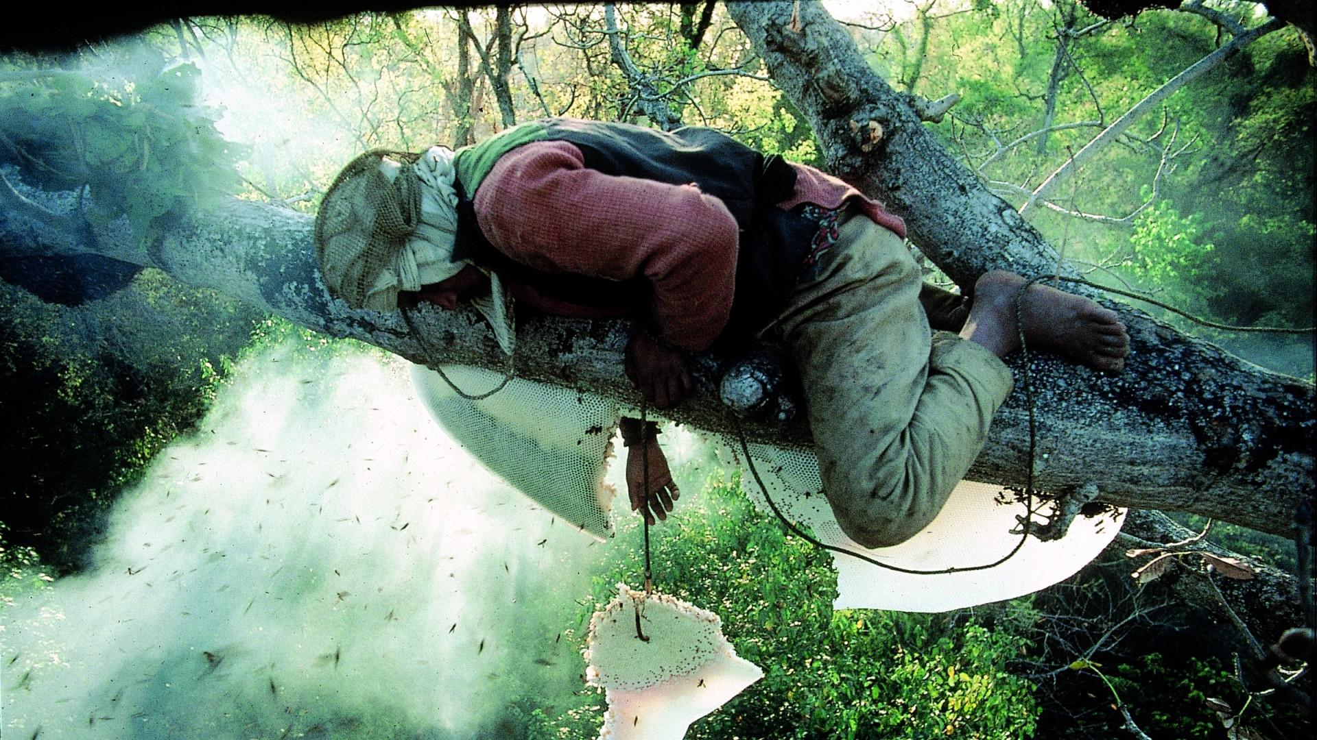 Nomadi džungle