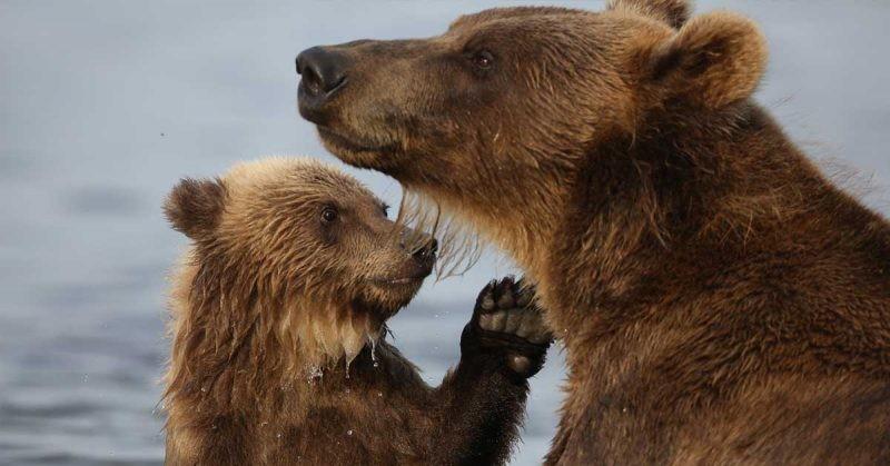 Medvjeđe supermoći