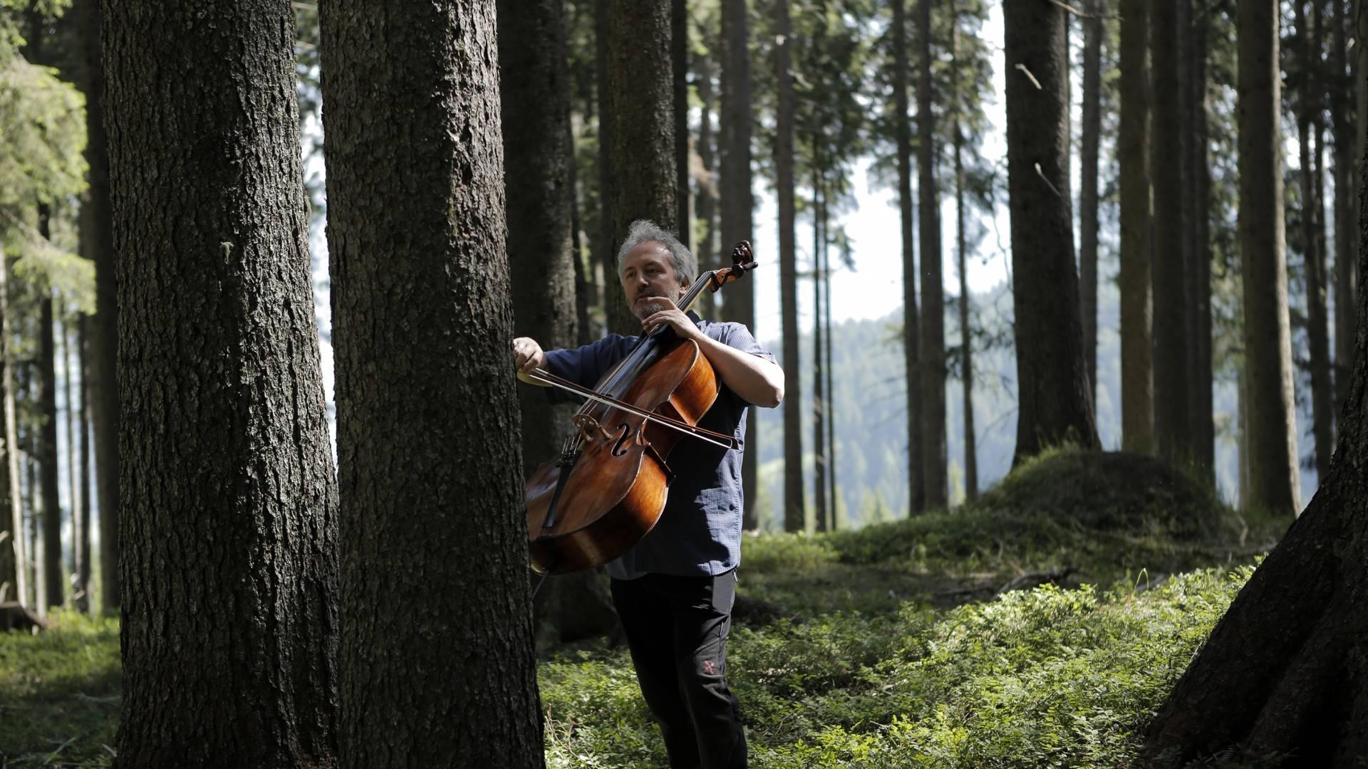Najbolje drvo za violinu