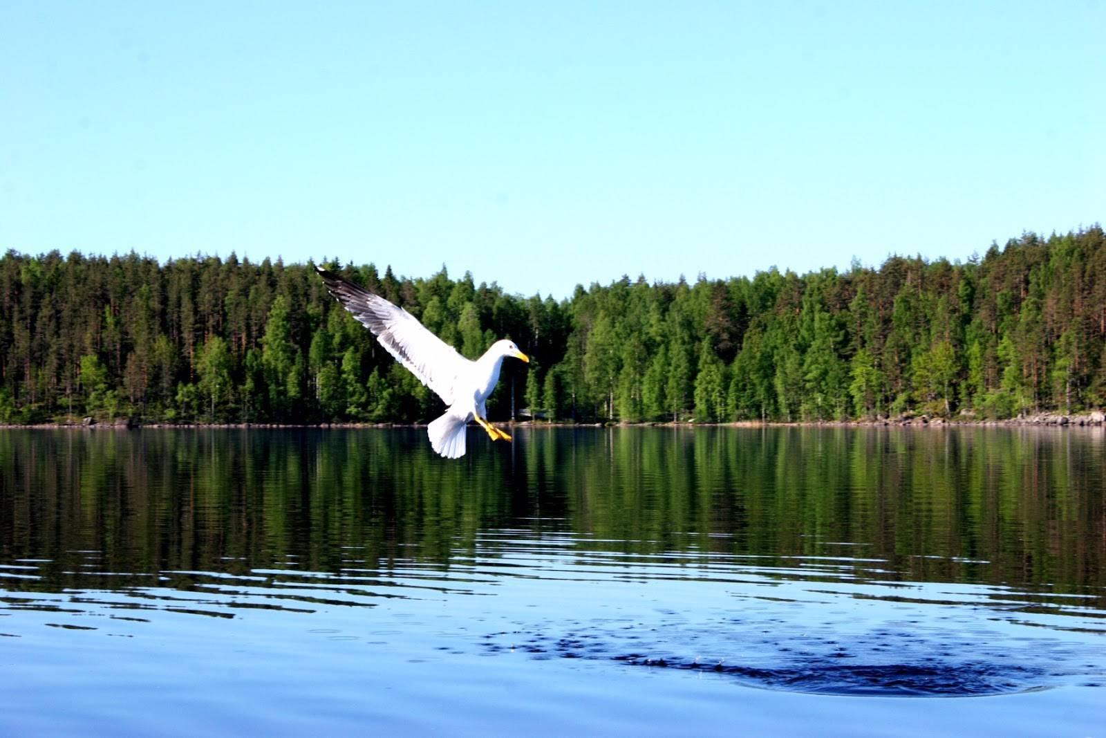 Priča o jezeru